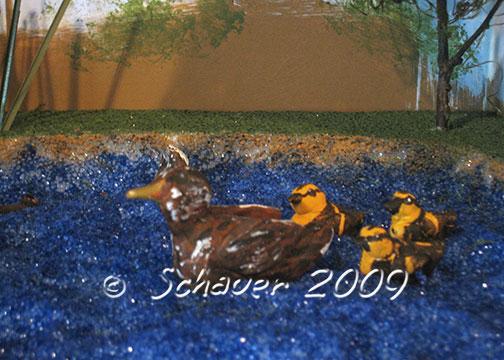 Thinking INSIDE the box--A duck habitat diorama  | Carla