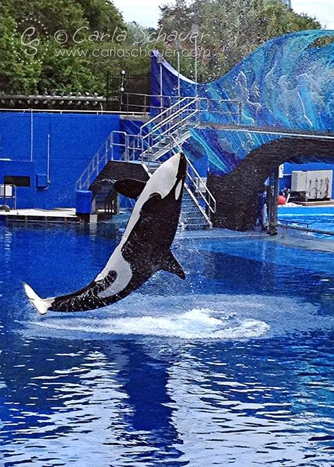 SeaWorld Shamu Show Orlando